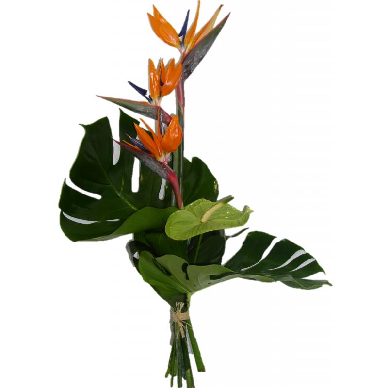 Bouquet De Fleurs Oiseaux Du Paradis
