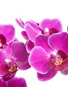 Plantes exotiques et orchidées | Achat en ligne | Fleurs Exotiques